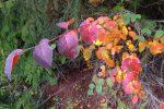 Ah les belles couleurs d'automne !
