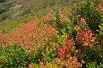 Ah ces couleurs d'automne !
