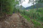 Puis un chemin forestier avant une route goudronnée