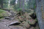 Joli passage aménagé en forêt