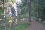 Toujours en forêt.