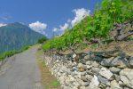 De la vigne