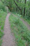 Je retrouve le chemin de la montée (qui part à droite). Je continue tout droit