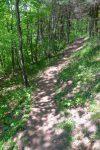 Le plaisir fut grand, après une lutte avec la végétation, de retrouver le chemin pour Champex