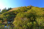 Fort jolie progression parmi les rhododendrons