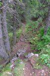 Court passage en forêt