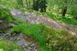 Au Pt1986, on traverse une route forestière allant à La Breya