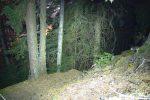 Descente en forêt moyenne avec la frontale. Ici pause lente de 240sec et je balaie la scène avec ma frontale
