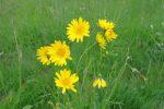 Fleurs au nom inconnu