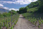 Passage dans les vignes avec système d'arrosage