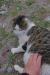 ... et son chat en quête de calins (cadrage moyen, mais difficile de caresser la bête et prendre une bonne photo de l'autre main !)