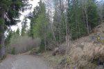 Par une route forestière on rejoint le bisse