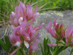 Des fleurs inconnues