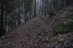 Passage en forêt qui monte bien, j'y perdais mon souffle vu mon rythme.