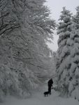 Les arbres sont chargés de neige et l'ambiance est agréable malgré la météo grise