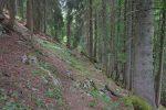 J'ai fini par retrouver le sentier, bref passage en forêt