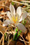 Le printemps frémit