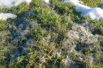 J'ai été surpris par ces filaments sur l'herbe, après la fonte des neiges