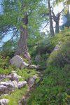 Le chemin commence à monter, un bref passage parmi les arbres.