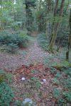A ce tronc d'arbre en décomposition, vers 730-740m, à gauche toute
