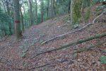 Le sentier est tapissé de feuilles, fort agréable en descente, mais des branches jonchent souvent le sol
