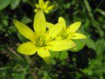 Joli fleur, mais dont j'ignore le nom