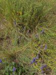Quelques fleurs et plantes aromatiques