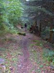 Le chemin est sympathique et tout en forêt