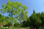 Les arbres sont nombreux et sympas