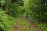 La route forestière devient plus herbeuse