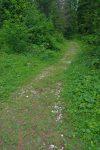 Le chemin s'enfonce dans la forêt