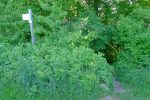 Départ du sentier de la Grande Gorge, mal indiqué