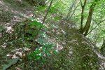 Le cairn est caché par deux arbrissaux quand on monte