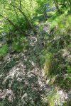 Les arbres sont appréciés car on peut s'y agripper !