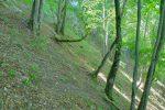A flanc de coteau en forêt.
