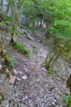 Puis un passage en forêt