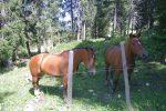 Après ce paturage nous montons en hors piste au mieux et rencontrons deux chevaux curieux