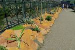 L'extérieur de la serre avec une série de cactus. Les petits lézards sont nombreux ici