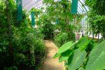 Touffu la végétation