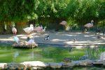 Des flamands roses et canards de plusieurs espèces