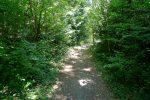 Le chemin passe dans une petite forêt