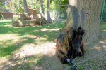 Secteurs des chèvres, le bouc, photo sombre ! Il vous manque l'odeur