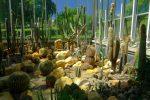 Cactus dans cette serre