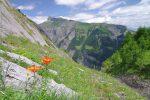 Les mêmes fleurs mais dans leur contexte, avec le mont Gond en arrière plan.