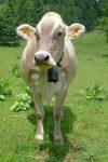 Mais oui t'es belle ! J'aime bien la robe de ces vaches grises