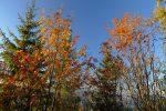 Jolies couleurs d'automne
