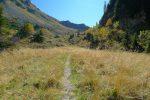Passage dans les herbes hautes, joli
