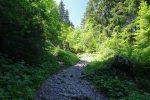 Le chemin passe en forêt et est caillouteux et il monte bien. Les muscles sont vite mis à contribution