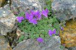 Autres fleurs (inconnues)