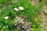 Joli ensemble de fleurs